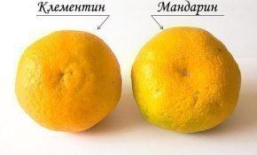 Чем отличаются мандарины и клементины