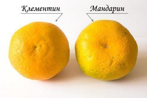Клементины и мандарины
