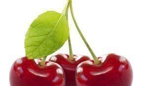 Лучшие морозостойкие разновидности вишни