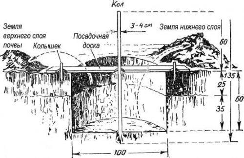 Схема ямы для посадки
