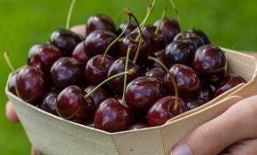 Выращивание вишни Брусницына