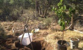 Выбор места для посадки вишни на участке