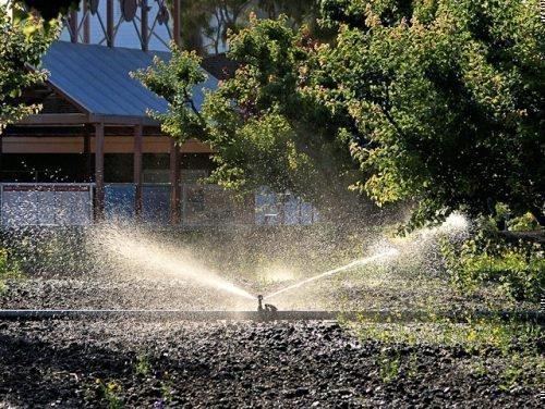 как поливать сливу летом
