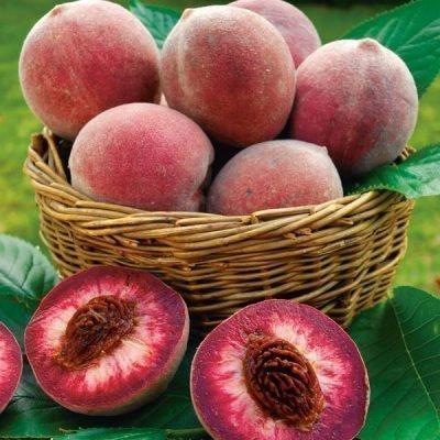 Красноплодный персик