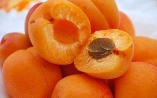 Особенности абрикоса Амур