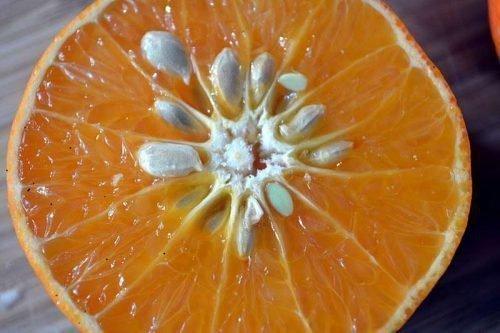 мандарин из косточки в домашних условиях