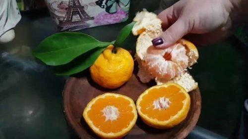 мандарин уншиу