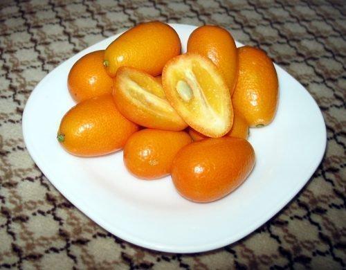 оранжекват ниппон