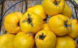 10 лучших садовых сортов айвы