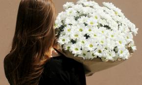 Виды хризантемы Бакарди и их выращивание