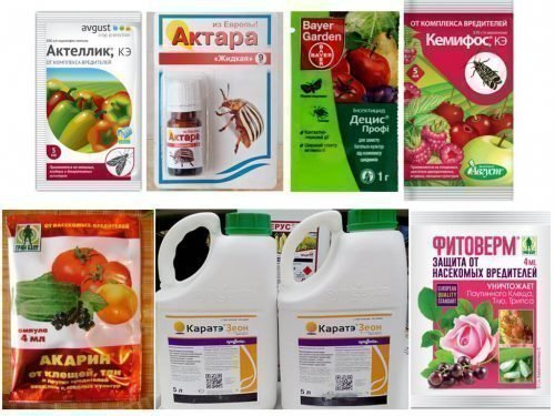 Химические препараты от тли