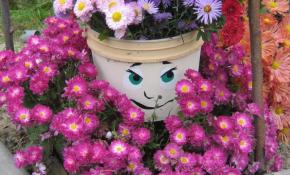 Как развести хризантему с помощью черенков осенью