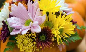 Как вырастить пышную комнатную хризантему