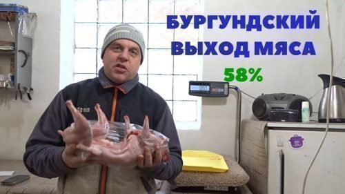 Выход мяса бургундской породы