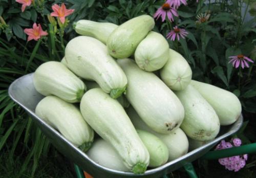 Урожай с куста Кавили