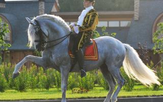 Разведение андалузских лошадей