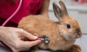 Болезни кроликов симптомы и их лечение