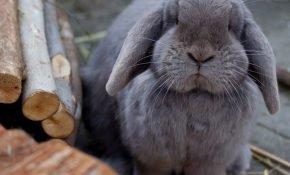 Симптомы и лечение болезней кроликов
