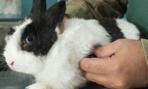 Болезни кроликов симптомы
