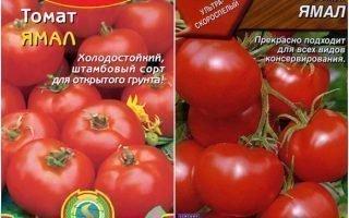 Разведение томатов Ямал