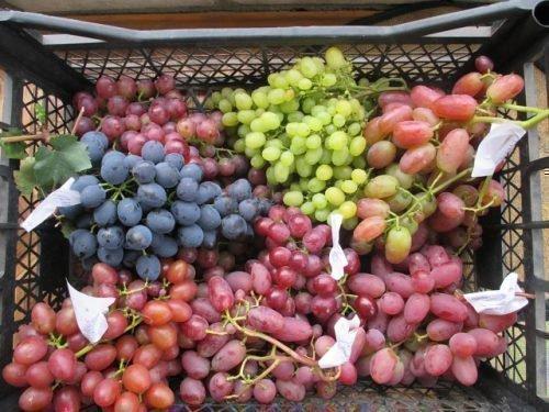 Органический виноград без химии