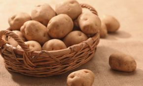 Все о сорте картофеля Аврора