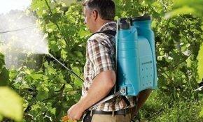 Чем и как опрыскивать виноград весной