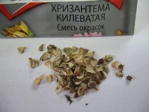 Семена хризантемы килеватой