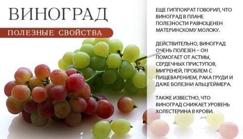 Ценные свойства винограда