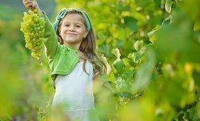 Выращивание винограда Кеша