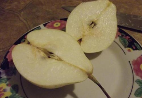 Плод Памяти Жегалова в разрезе