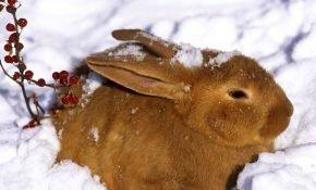 Зимнее кормление кроликов в домашних условиях