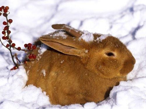 чем кормить кроликов в домашних условиях зимой