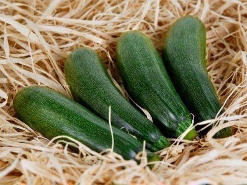 как хранить кабачки