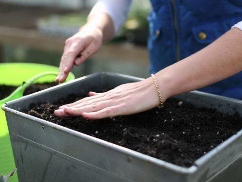 как правильно сажать огурцы на рассаду
