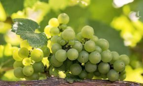Сколько килокалорий в зеленом винограде