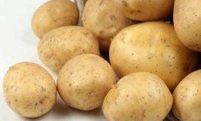 Правила агротехники картофеля Адретта
