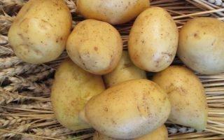 Правила выращивания картофеля Гала