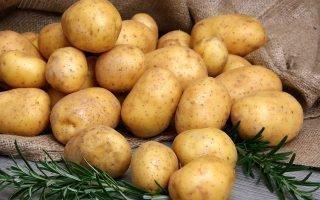 Правила посадки и ухода за картофелем сорта Невский