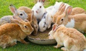 Комбикорм в рационе кроликов