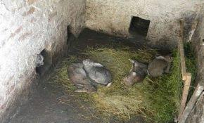 Способы разведения и содержания кроликов в яме