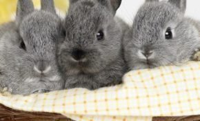 Все о кролиководстве для начинающих