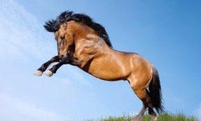 Самый быстрый конь в мире