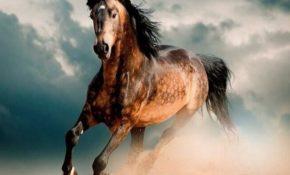 Самая быстрая порода лошадей
