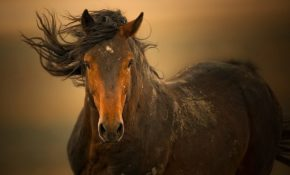 Каких лошадей называют мустангами