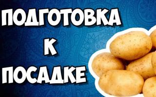 Этапы подготовки картофеля к посадке