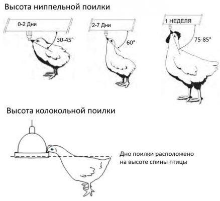 поилки для кур