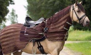 Как подобрать и пошить попону для лошади