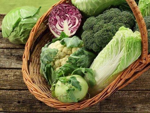 поздние сорта капусты для длительного хранения