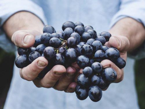 проблемы с виноградом